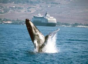Whale_Breaching-0066_10589[1]