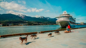 "A dog sled team driven by Maliko Ubl from the TEMSCO Helicopters Mendenhall Glacier Dog Sledding Tours and Alaska Icefield Expeditions welcomes the ""Ruby Princess"" to the port of Juneau during its maiden voyage in Southeast Alaska."